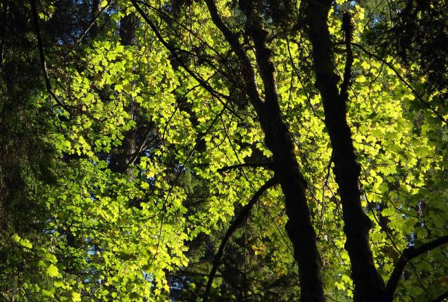 Autumn sunlight never penetrates to the floor of the glen